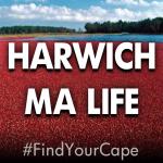 harwich ma life