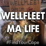 wellfleet ma life